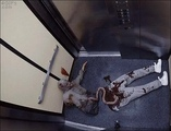 Your daily dose of horror living dead in elevator