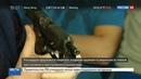 Новости на Россия 24 • Трагедия на Алтуфьевском бывший гаишник не перенес разрыва с возлюбленной