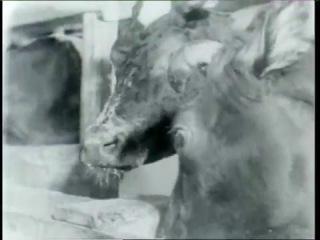 1971 год «Рекорды Людмилы Колосовой»