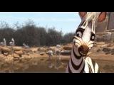 Король сафари (2014): Трейлер (дублированный)