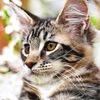 Кошкомир - Коты | Кошки | Фото | Видео | Приколы