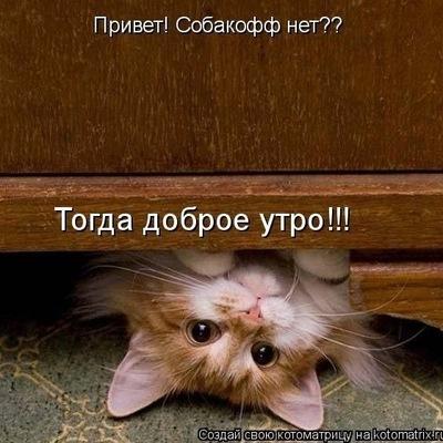 Софья Усова, 1 июля , Новосибирск, id205699815