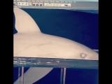 The sharks feeding demo