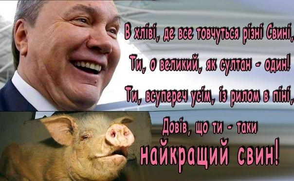Найкращий свин в Україні
