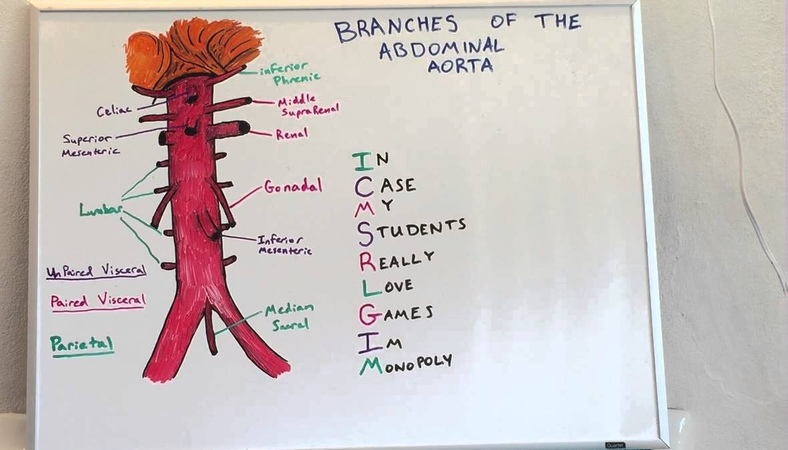 Branches of Abdominal Aorta - Anatomy Lecture for Medical Students - USMLE Step 1
