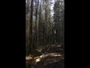 Ржевский лесопарк весной
