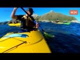 Морской котик ударил туриста осьминогом