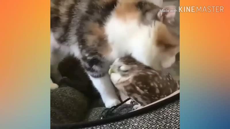 совушка сладкая