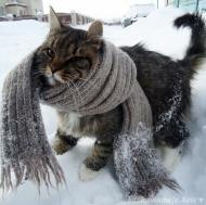 Зима,меня хозяйка любит,а тебя???