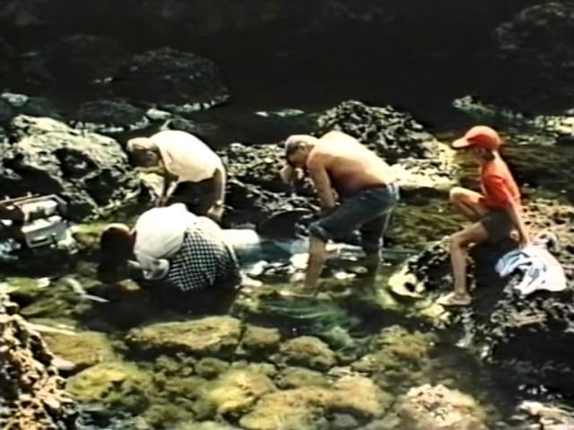 Люди и дельфины художественный фильм, часть 2