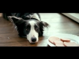 Валентин Гафт - От чего так предан пёс