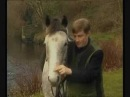 Father Ted My Lovley Horse Dream