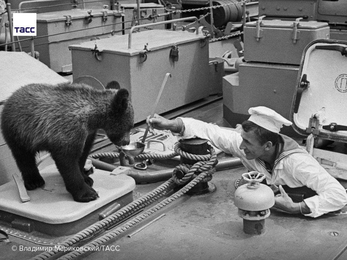Корабельный кок Сергей Косташ и любимец экипажа медвежонок Тимофей. СССР, 1981 год