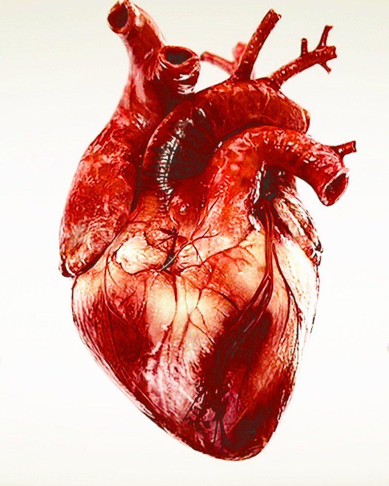размеры сердца картинки