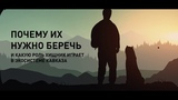 Экоуроки о переднеазиатском леопарде от WWF России