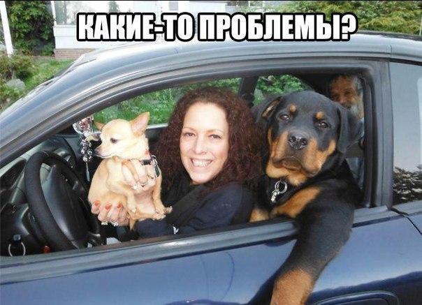приколы kz: