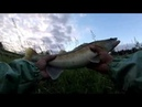 Рыбалка на джиг и твичинг в дождь Трофейный судак эпичный сход
