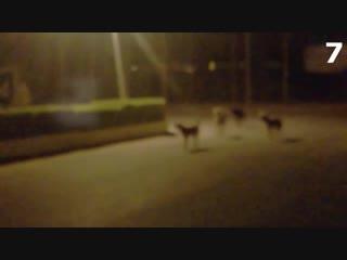 15 Страшных Видео, Когда Домашние Животные Увидели Настоящего Призрака!!!