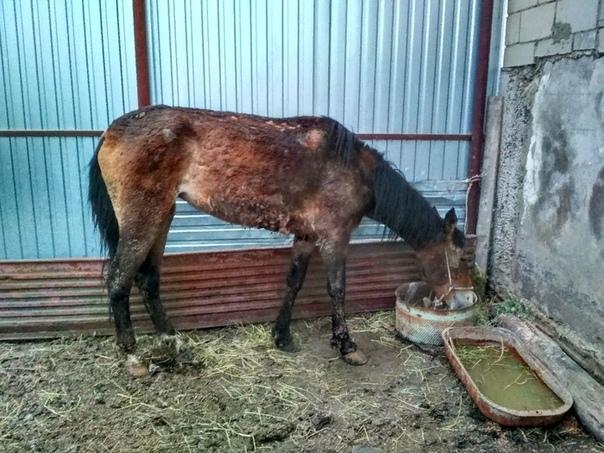 Почему конина - жестокость, а говядина - норма Среди людей нередко встречаются конники. Они, как правило, крайне категорично относятся к поеданию конины и к бойням в целом, при этом, употребляют