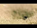 Удивительные насекомые Муравьиный лев