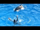 Dolphin Saves Girl from Drowning