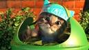 Мой маленький КОТЕНОК пошел в школу ! Детский мультик и Симулятор милого котика - Игра для детей