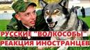 Русские ВОЛКОСОБЫ таинственный гибрид защищающий наши границы КОММЕНТАРИИ ИНОСТРАНЦЕВ