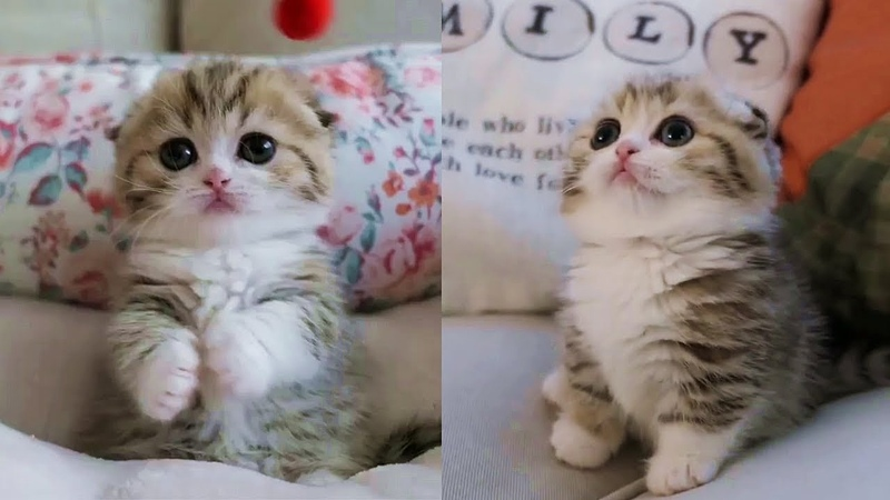 This Baby Kitten Will Melt Your Stress Away