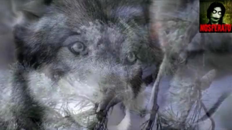 Легенда о волке и волчице (стихотворение).mp4