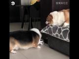 Корки ругаются друг с другом