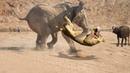 СЛОН В ДЕЛЕ Слон против львов крокодилов носорогов