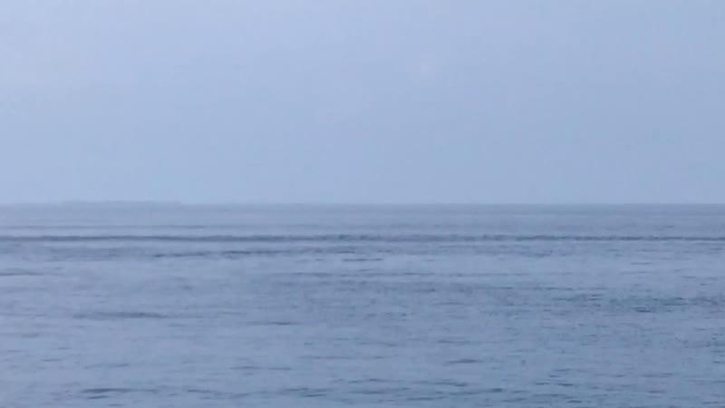 Дельфины у берега сегодня 🐬