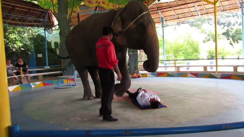 слон и вьетнамец