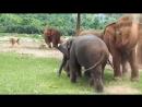 Слоненки играют в футбол