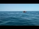 То ли волны - толи дельфины.)