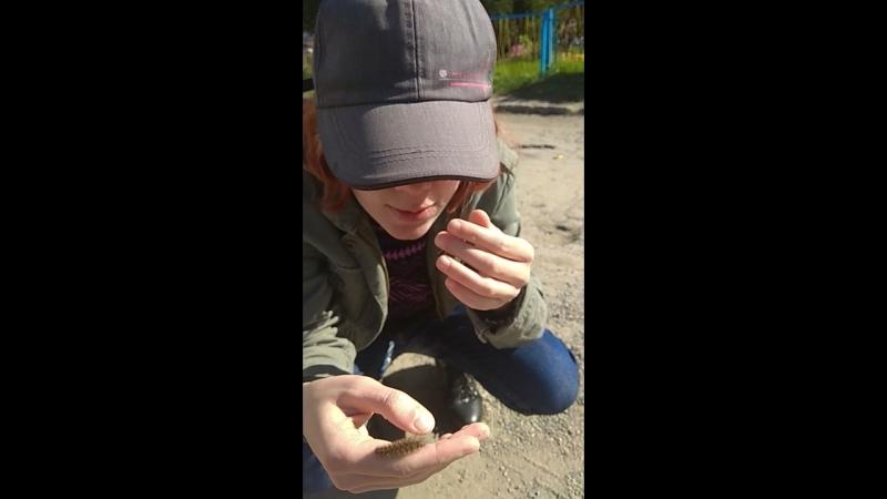 Беру на руку мохнатую гусеницу