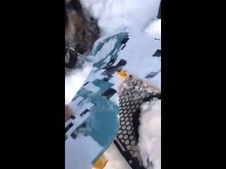 На Урале охотники на снегоходах сбили волка, но он остался жив. Что думаете?
