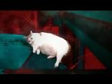 Очень странные дела (VHS Video)