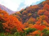 [HD] Autumn in Japan 日本の紅葉 秋の東北・栗駒山の紅葉  紅葉便り・花の名所&#2