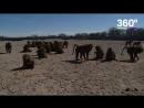 Дерзкий побег бабуинов