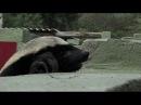 Самое умное животное в мире - Медовый Барсук или Медоед