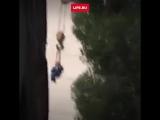 Спас котика, который застрял на дереве