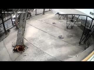 Дерево упало на авто в Ялте 1.03.19