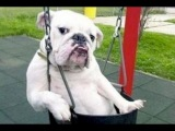 Funny Videos Of Dogs Compilation 2014