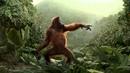 Rynkeby Monkey Dance