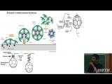 Основы биологии (4). Репликация ДНК. Ошибки в ДНК. Дыхание.