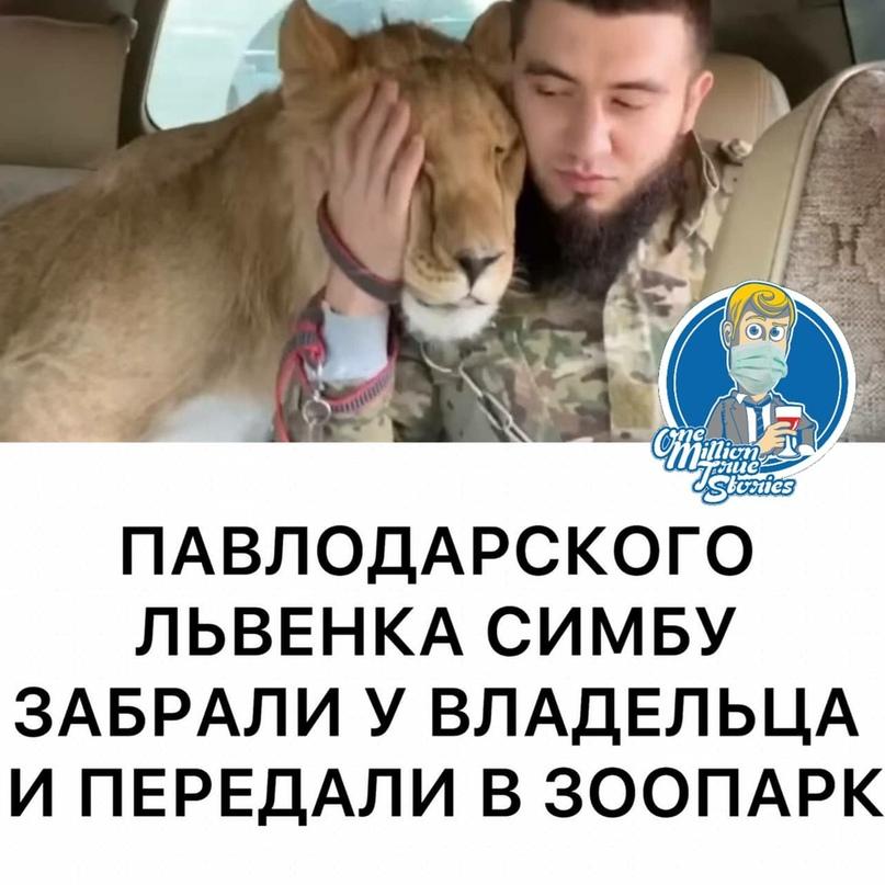 Павлодарского львенка Симбу забрали уего владельца. Хищник отправился вкарагандинский зоопарк.