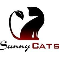 Sunny Cats