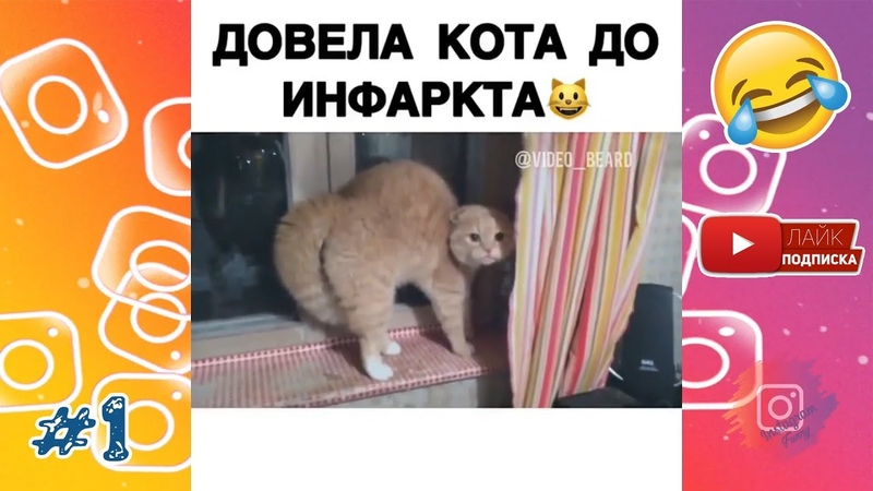 😂ДОВЕЛА КОТА ДО ИНФАРКТА😜 Лучшие Приколы Instagram Instagram Funny 1