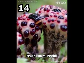 Самые удивительные грибы в мире